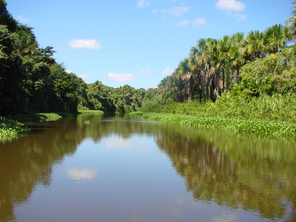 There are more than 1000 species of fish living in the Orinoco River. These species include the piranha, electric eel, and a species of catfish called the Laulao which can reach more than 200 pounds.