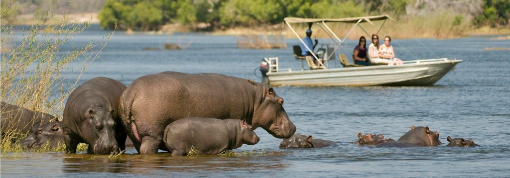 Along the river numerous animals can be found. Along the shore Crocodiles and hippopotamus are abundant. Large animals such as elephants, lions, zebras, giraffes, and buffalo can be found near the river in many areas.